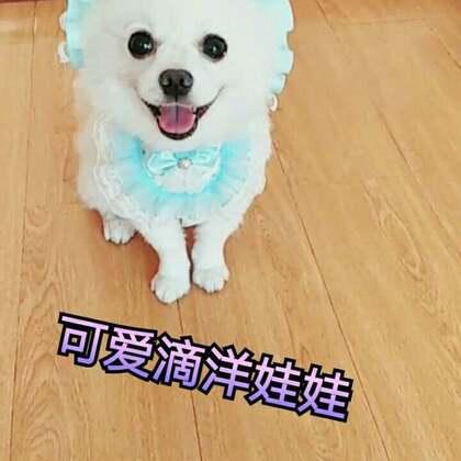 #宠物#仔仔变身美萌萌滴洋娃娃😜#我的宠物萌萌哒##宠物装扮大赛#