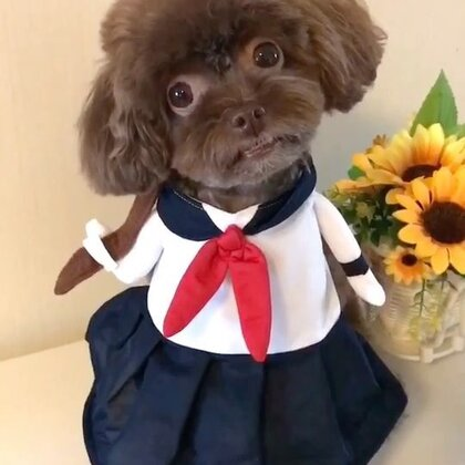 #宠物#可爱的逗宝小同学祝大家十一和中秋节快乐🎈🎁🎉🎊逗宝爱你们哦❤️#我的宠物萌萌哒#
