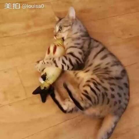 小猫吃鱼矢量图