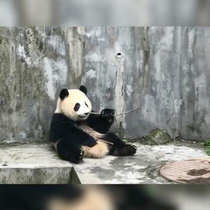 允允第二次来看熊猫🐼,第一次来是三年前允允四五个月的样子#曦允在成都##曦允3岁5个月#+10