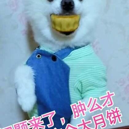 #宠物顶月饼大赛#月饼顶着顶着就到嘴里了,这招绝了😂😂#宠物界吃货##宠物#