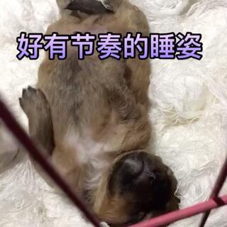 #萌宝睡姿大pk##我的狗狗是逗比#好萌的睡姿