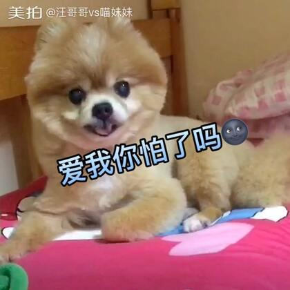 仔仔:麻麻每天辛苦给我喂饭喂药❤我给麻麻铺床🌚我真的是帮忙 真的🙂#宠物##宠物酷炫技能##坚强的仔仔#
