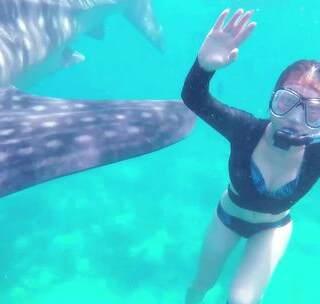 薄荷岛鲸鲨:美女在体型巨大的鲸鲨身旁浮潜,不怕被咬吗?😱 #hi走啦##旅行##我要上热门#