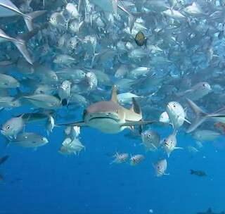 """诗巴丹:全球十大潜水圣地,在""""神的水族箱""""记录鱼群风暴,美到窒息!😍 #hi走啦##旅行##我要上热门#"""