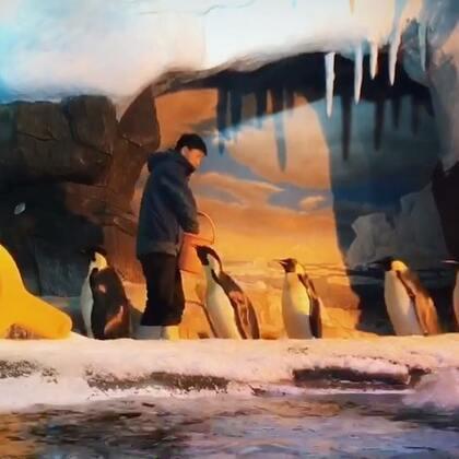 #曦允在成都海昌极地海洋公园#看到企鹅🐧心情好,萌死了曦允3岁5个月#+15