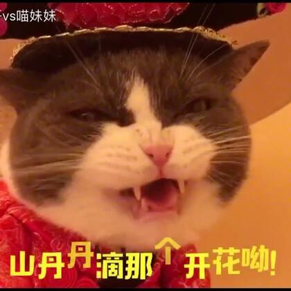 窝缩喵妹呀~你可长点心吧,别人唱歌🎤嗨皮😁你唱歌惊魂呀😲此片对缓解国庆假期综合症有显著疗效🤣各位帅锅美吕^都表错过哦😁点赞的都是好银👆本喵赐你立刻、马上暴瘦二十斤😆啊哈哈哈哈。#宠物##给宠物配音##喵妹嘻哈剧#