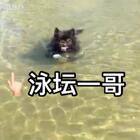 """黑哥剪毛游泳记 麻麻 你上来点 别去水太深的地方😂万一""""淹死""""我拖不动你🙈我的儿 就是孝顺🤦🏻♀️#宠物##运动##喵汪洗澡记#"""