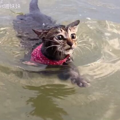 😊大家好 给大家介绍一下 这是我们家的游泳健将 @ 黑哥 喵妹 阿di #宠物##运动##俩喵欢乐多#