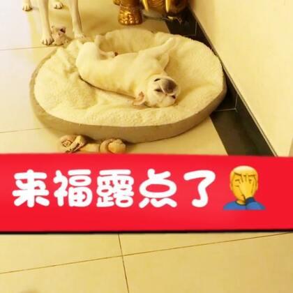 🙈🙈🙈#宠物##家有萌宠##我要上热门@美拍小助手#@宠物频道官方账号
