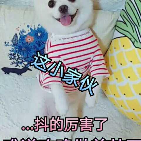 【一summer💟小旺仔美拍】#宠物#抖抖抖~还笑的介么甜😜😜...