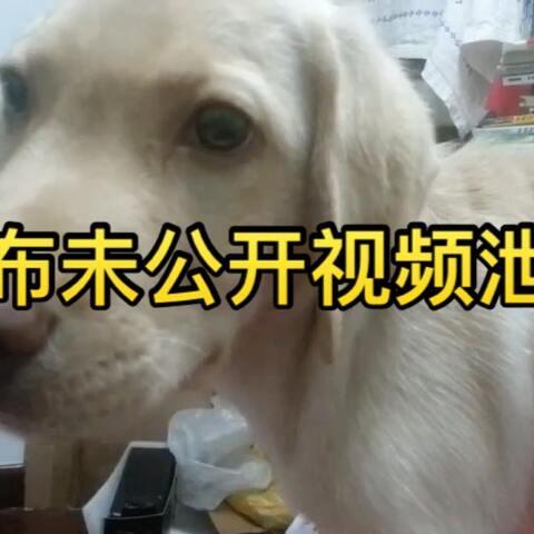 """【小布的日常生活美拍】#小布的日常生活# """"号外号外 小..."""