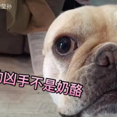 【Sooki莹莹孙美拍】名侦探孙柯南上线了!凶手就是它...
