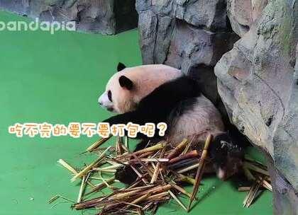 #也就才看二十遍##大话熊猫#不要错过雅一教大家的花式打包大法!