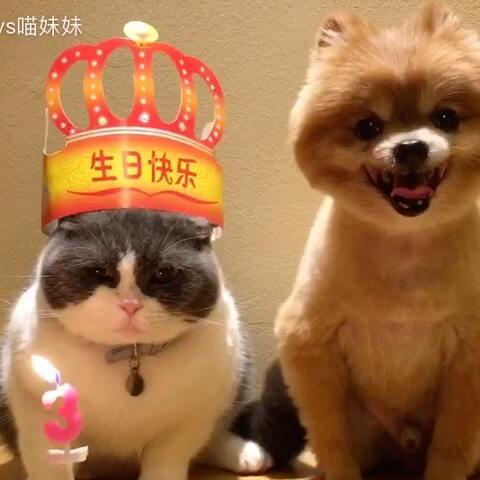 【汪哥哥vs喵妹妹美拍】妹姐-今天生日我最大👑四弟你别...