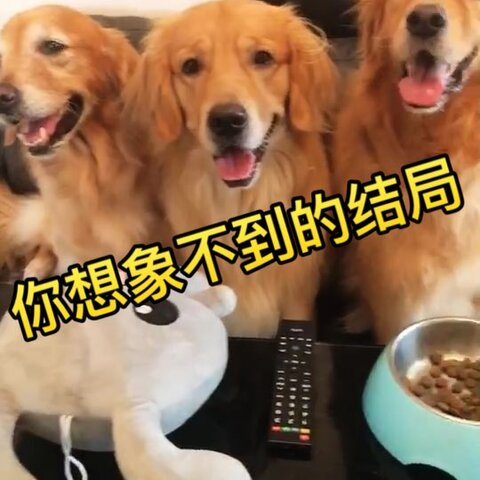 【神金汪美拍】主人不在家时,狗狗会做些什么?...