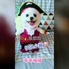 #宠物#不一样滴小海盗😜#我的宠物萌萌哒##宠物装扮大赛#