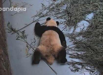#也就才看二十遍#小平胸挺好哒想咋躺就咋躺!