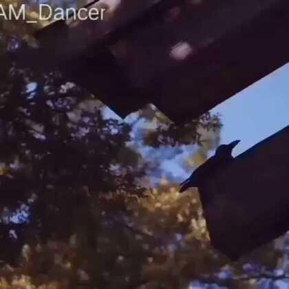 再来一个RIKIMARU老师的视频,巨帅好么!!!一想到他10月22就来超激动\(≧▽≦)/#西安街舞##热门##嘉禾舞社#