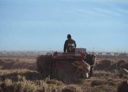 东北农民自家黑土地种水稻,吃着喷香,菜没做好孙子就吃完了一碗饭#二更视频##农业##公益#