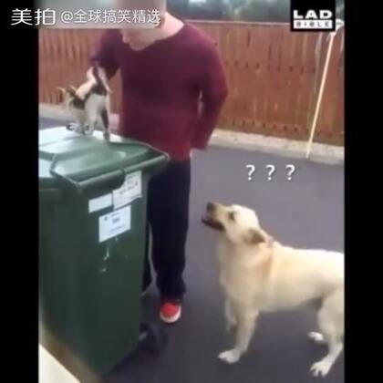 是我狗子不够骚了还是主人你眼光高了? #全球搞笑精选#