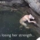 一只狗狗不慎掉进深井,盘旋着游了数小时,筋疲力竭,绝望之时。。奇迹发生了!愿这世界上每个生命都能被温柔以待……#宠物##感动#