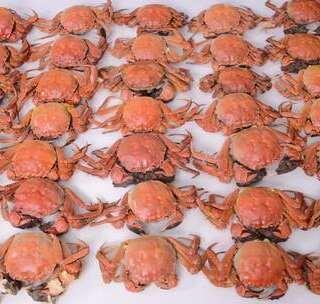 挑战!一口气连吃100只大闸蟹,结果会怎样?#美食#