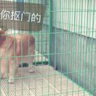 #宠物##搞笑#纯属娱乐
