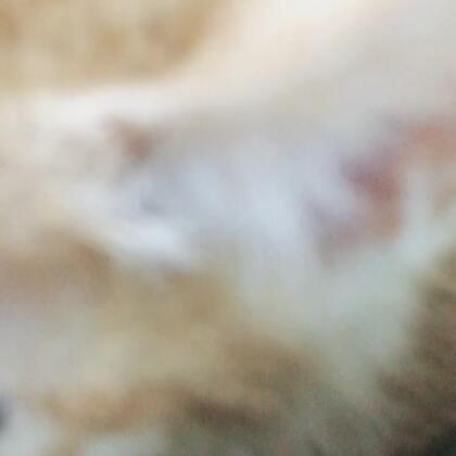 #wu ha##宠物猫# 欢迎新成员 公主 😍😍😍😍
