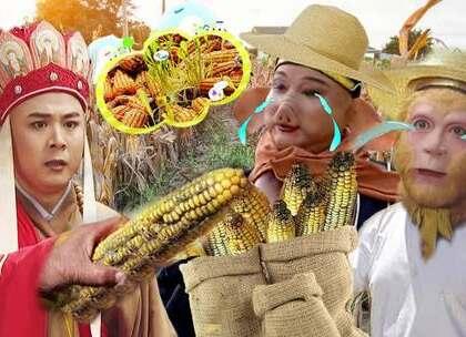 玉米涨价了,悟空却哭了!#我要上热门#