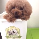 #宠物#点点:躲在储粮桶里我就绝对不用担心饿肚子啦😄😄#我的宠物萌萌哒#