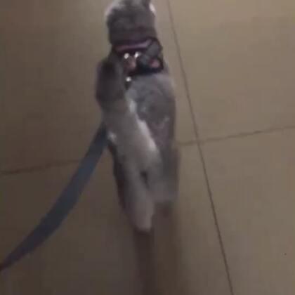 一出电梯跟小兔子似的跑的贼溜快😂还看了看小鸟吃了吃草😄