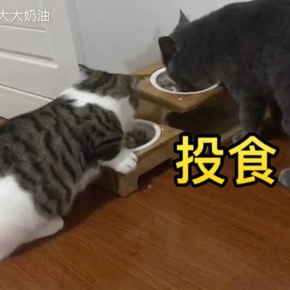吃个宵夜,晚安~#宠物##奶家军#【奶家军的店❤️https://shop61141321.taobao.com/?spm=a313o.7775905.1998679131.d0011.35627f98vShcbu 】