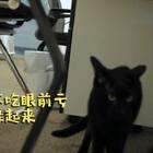 timo:最近朕的地位频频被要挟,大哥不好当啊!#宠物##timo#