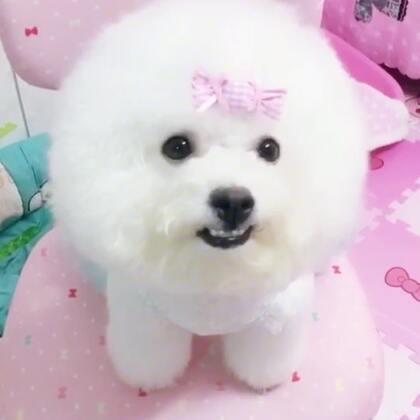 #宠物##我的宠物萌萌哒##汪星人#摩小西这是你自己说的爱我一万年啊😂😂😂还有你最爱的是我并不是璇妈妈@拧巴中的拧巴巴👠👠 😏😏😏大家跟我做个证😌😌😌
