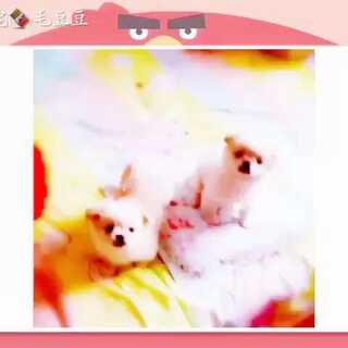小浣熊和萌宝两个月视频#宠物#
