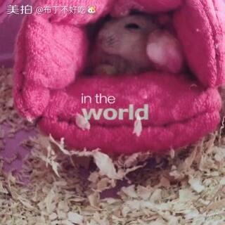 哈哈,刚做好的鼠窝它就钻进去了😄#仓鼠##宠物##仓鼠##仓鼠的日常#