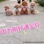 #宠物#今天太阳☀️好舒服,带四个宝贝出来跑跑更健康…