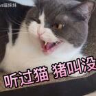 说出来🤷🏻♀️我都不信 可是 妹子真!!的!!猪!!叫!!了!!😂截了一段放慢动作🙈你们手机调大音量随意感受下😳别问我养了啥😂真的是猫🐈#宠物##宠物独特叫声##俩喵欢乐多#