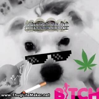哈哈哈#宠物#笑声魔性#宠物狗狗#