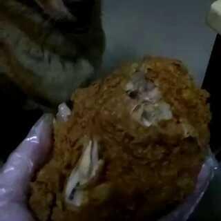 胖胖#宠物#吃炸鸡
