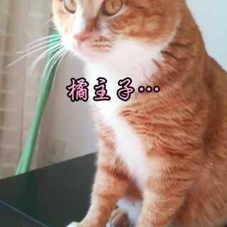#宠物##橘猫#