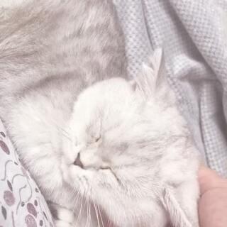 #宠物##猫咪##萌猫咪#