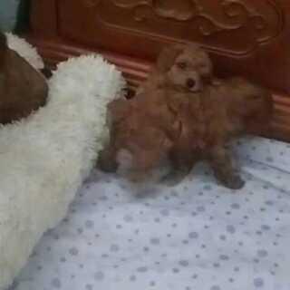#宠物##我的宠物萌萌哒#32