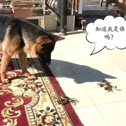 #宠物##我要上热门@美拍小助手##汪星人#大伙快来看看吧这世界变化太快,老鼠给猫当伴娘!辛巴的老婆是螃蟹🦀让我们一起庆祝他洞房花烛🎊🎈🍻🍺最好能把根留住😄