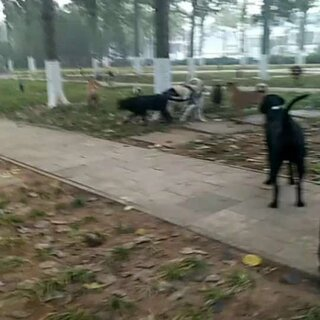 #宠物#有人说我,让我把狗狗都卖了,买一个好狗,名犬,我就是笑一笑,没有说话,虽然我家狗不是名犬,但是我一样爱他们,名犬不也是狗吗?名犬不是四条腿?名犬不也是他们国家的土狗吗?中华田园犬就是中国的土狗,是中国的本土狗!!