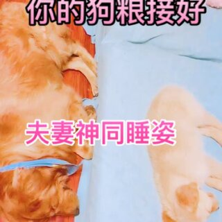 #我要上热门##宠物##汪星人#@宠物频道官方账号 @美拍小助手 我在忙事情,两毛孩子睡着了。有爱的一刻记录下来……晚安💤