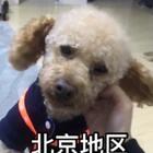 我在北京市朝阳区管庄环岛这里见到一只小狗,是男生!!求转发帮他找到家。谢谢大家了🙏