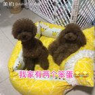 #汪星人##宠物#我家有两个笨蛋😂😂