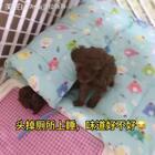 #汪星人##宠物#抹茶,你是不是有心事,睡不着😂😂